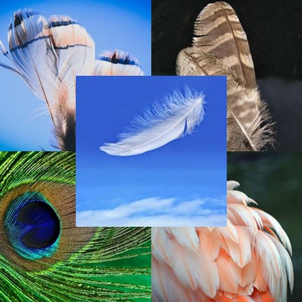 Sacred Feathers: Spirit Messengers of the Angelic Realm